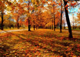 22 октября в Петербурге пройдёт субботник