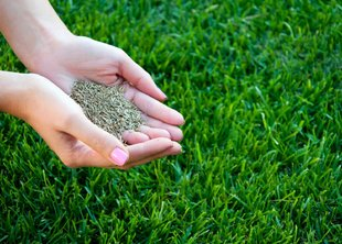 Что нам стоит газон вырастить: ликбез для начинающих садоводов