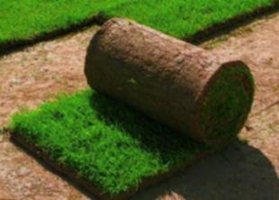 Рулонные газоны