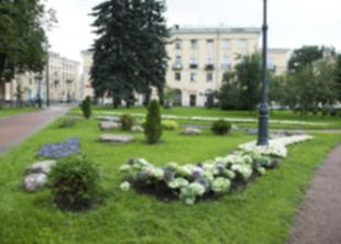5,5 тысяч гектаров газонов благоустраивают садовники СПб