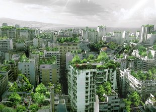 Август – благоприятное время для озеленения города
