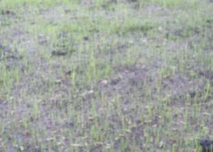 Что делать если семена газонной травы не всходят?