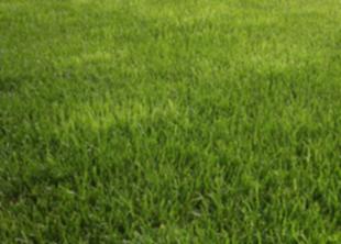Газон, как один из лучших инструментов обогащения почвы