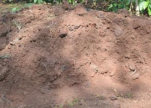 Газоны на илистых почвах