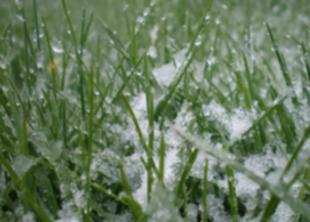 Готовим газон к зимовке