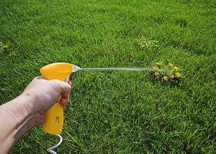 Как избавиться от одуванчика на газоне
