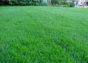 Как отличить партерный газон от универсального