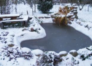 Как подготовить водные растения к зиме?