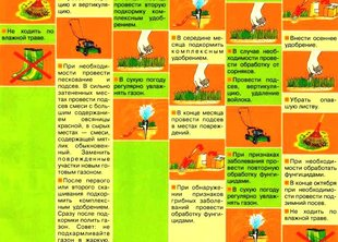 Календарь ухода за газоном по сезонам