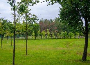Ладожский парк благоустроят к октябрю