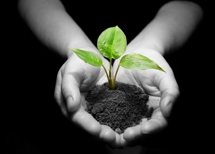 Любовь, подтвержденная делом – акция по озеленению в городе Краснодаре