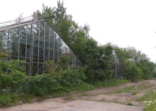 Реконструкция Таврического сада завершится в 2025 году