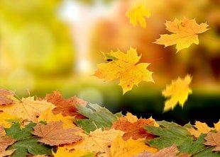 Поздравляем первым днём осени!