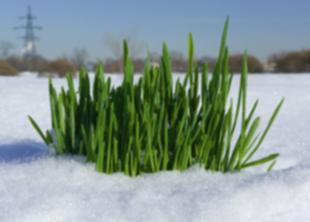 Трава будет в хорошем состоянии и в 15-градусов мороза