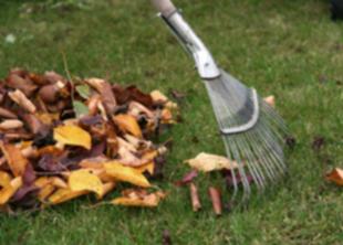 Как правильно убирать опавшую листву