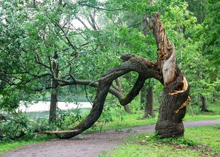 Ураган повалил более 150 деревьев