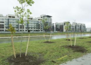 В Петербурге за месяц посадили две тысячи деревьев