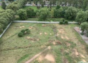 В Пулковском парке вырубили деревья