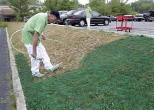 Вечнозеленая лужайка – в США теперь модно красить газоны!