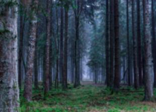 Запрет на посещение лесов продлят до 5 июля 2020