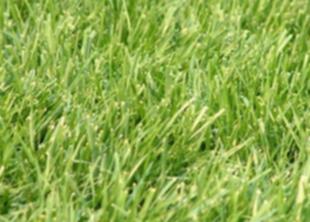 Жителям Техаса придется отказаться от газонов