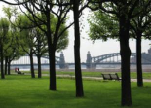 В Петербурге высадят 11 тысяч деревьев